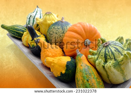 Close up of miniature pumpkin variety on wooden tray against orange background. - stock photo