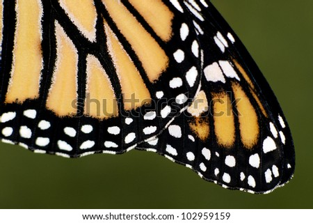 close monarch butterfly wings stock photo 102959159