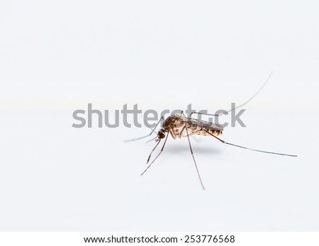 Close up of mosquito on the white wall - stock photo