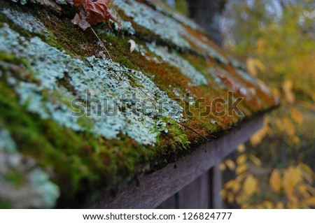Close up of moss and fungi growing on roof.