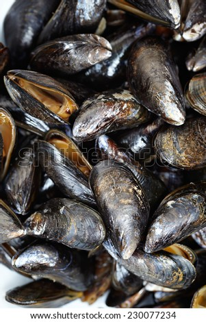 Close up of mussels - stock photo