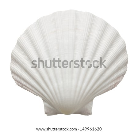 Close up of ocean shell isolated on white background - stock photo