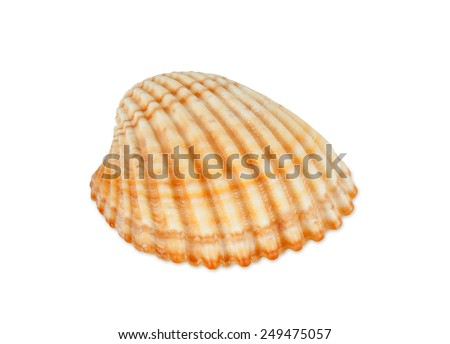 Close up of ocean shell isolated on white background.