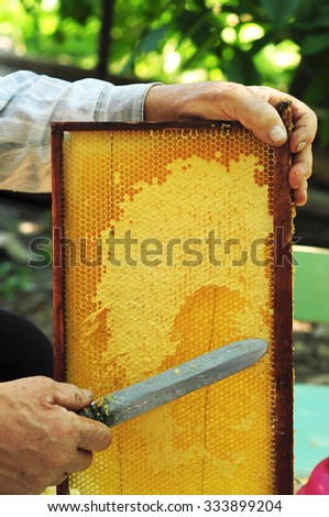 Close up of Old Man Human Hand Extracting Honey from Yellow Honeycomb Outdoor. Beekeeper Cuts Wax Off from Honeycomb Frame with Special Knife. - stock photo