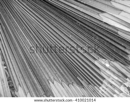 Close up of old palm leaf background
