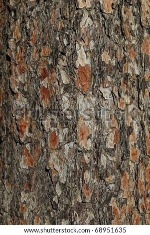 Close up of old pine bark surface texture