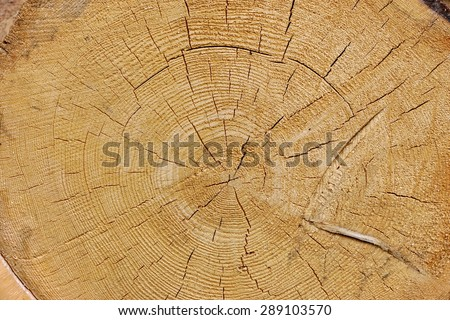 Close-up Of Old Pine Tree Rough Cross Section Background Texture With Many Growth Rings Circular Pattern - stock photo
