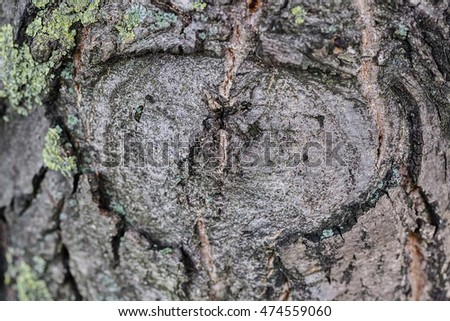 Close up of old tree bark texture in the forest, highly detailed
