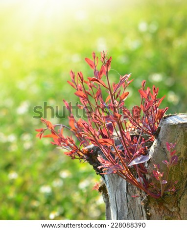 Close-up of old tree trunk young leaves - stock photo