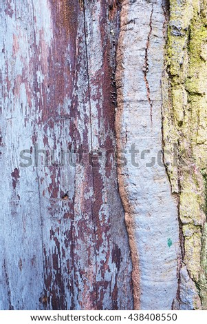 Close up of old wood tree bark texture with green moss