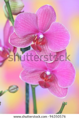 Close-up of orchid - stock photo