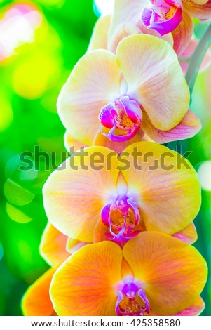 Close Up of Orchid Flowers, Thailand. - stock photo