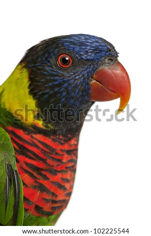 Close up of Ornate Lorikeet, Trichoglossus ornatus, a parrot in front of white background - stock photo