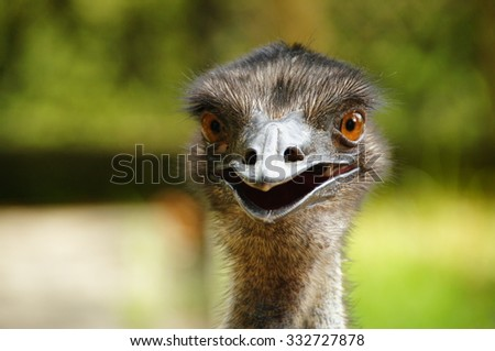 Close up of ostrich with shallow depth of field (DOF) - stock photo
