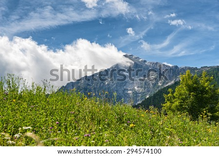 Close up of overgrown grassy meadow with mountain vista in backdrop beneath blue sky and white clouds - stock photo