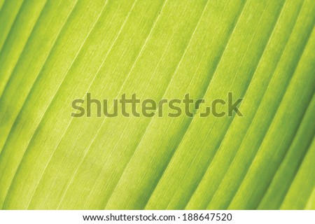 Close up of palm leaf texture  - stock photo
