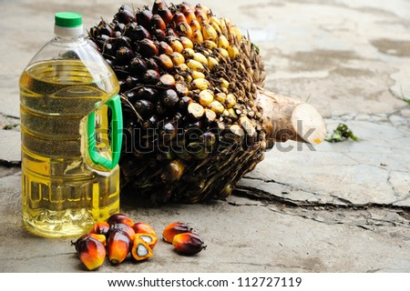 Close up of Palm Oil seeds and cooking oil, selective focus.