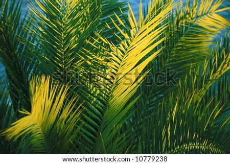 Close-up of palm-tree leaves in the sunset - stock photo