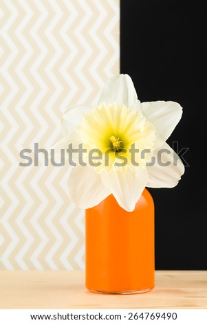 Close up of pastel daffodil in vivid glass orange vase against black and zigzag background. - stock photo