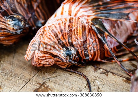 Close-up of pattern of scorpion fish (pterois volitans, scales and spikes on head - stock photo