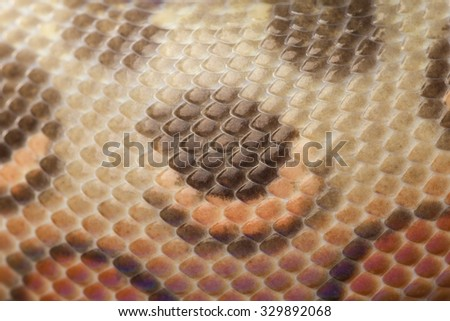 Close-up of patterned skin of a Rainbow Boa