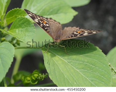 close up of peacock butterfly perched on green leaf in garden - stock photo