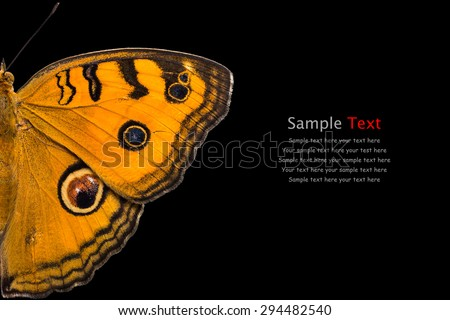 Close up of Peacock Pansy (Junonia almana) butterfly, isolated on black background with clipping path - stock photo