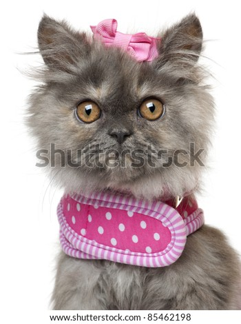 Close-up of Persian kitten dressed in pink, 3 months old, in front of white background - stock photo