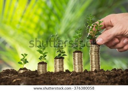 Close-up Of Person Hand Holding Small Plant On Stacked Coins - stock photo