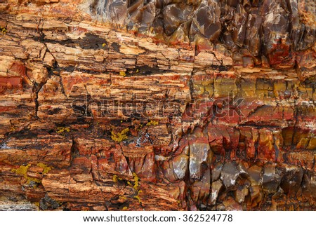 Close-up of petrified wood in Escalante Petrified Forest State Park, Utah, USA  - stock photo
