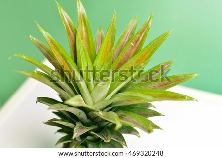Close-Up of Pineapple Leaves