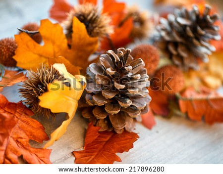 Close Up of Pinecone Still Life Amongst Autumn Leaves with Selective Focus - stock photo