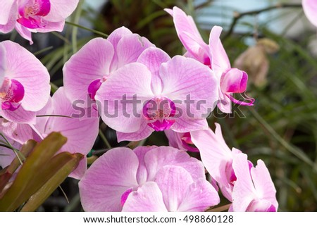 close up of pink blossom orchid