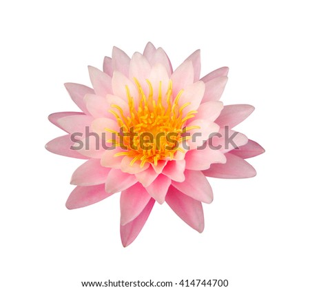 Close up of pink lotus isolated on white background, Clipping path included. - stock photo