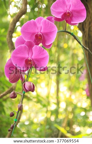 Close-up of pink orchid flower / Bouquet of flower orchids in graden