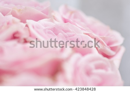 Close up of pink roses - stock photo