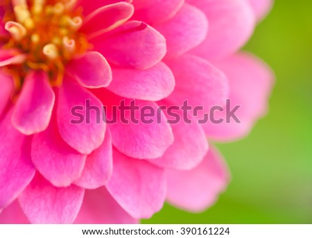 Close up of pink wild flower on nature background. Beautiful floral use as background. Shallow depth of field (dof), selective focus. Outdoors. - stock photo