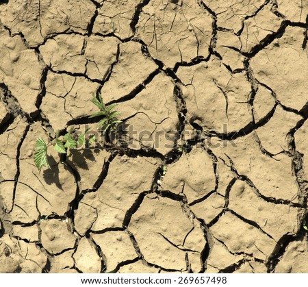 Close up of plant beginning to grow from a crack in otherwise dry mud - stock photo