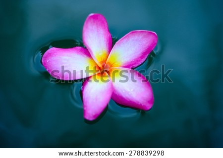 Close up of plumeria on the water background - stock photo