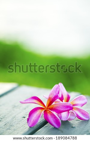 Close up of plumeria or frangipanni blossom on the  wood table background.-3 - stock photo