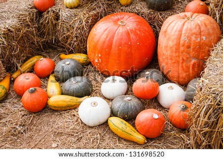 Close up of pumpkins and gourds on straw - stock photo