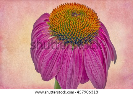 Close up of purple cone flower,photo art