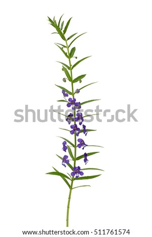 Close up of purple flower isolated on white background