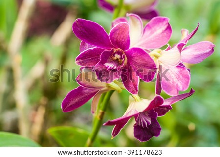 Close-up of purple orchid Phalaenopsis. Bouquet of flowers orchids.