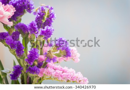 Close up of Purple statice sinuata flower(Limonium sinuatum Statice Salem) - sea lavender