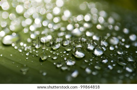 Close-up of rain drops on a leaf