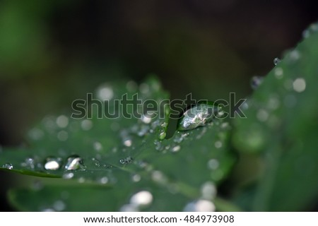Close up of rain drops on green leaves.