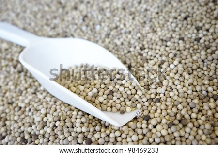 Close up of raw white pepper grain in shallow depth of field.