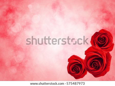 Close up of red rose flower with water drops on beautiful bokeh light background, Valentine's roses background