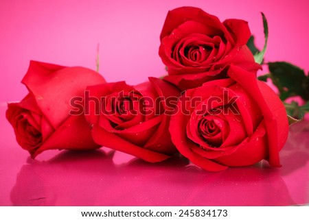 close up of red roses on pink background,valentine day concept